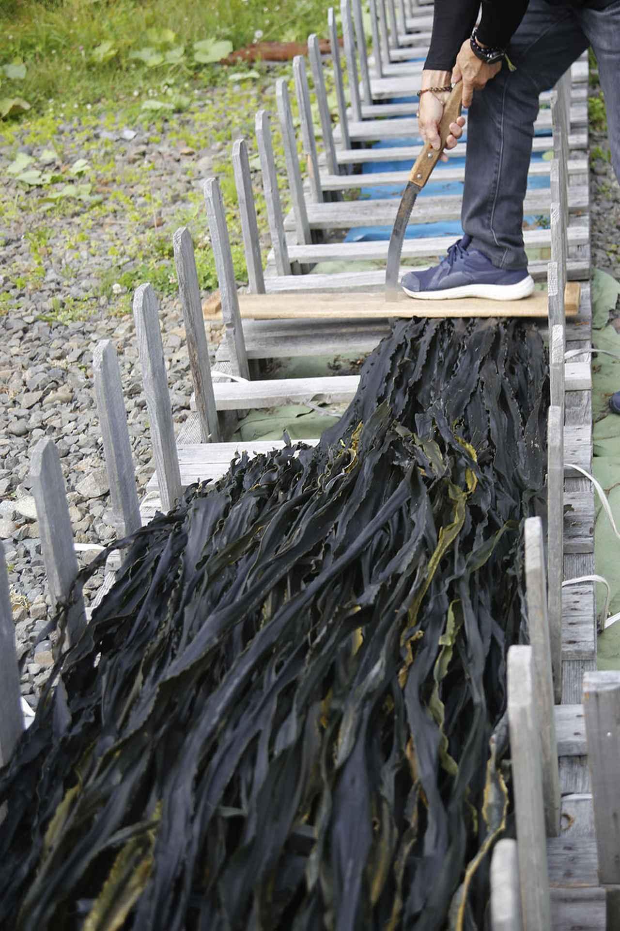 画像2: ツアー1日目 昆布森で昆布干しを手伝って地元の海産物に舌鼓!
