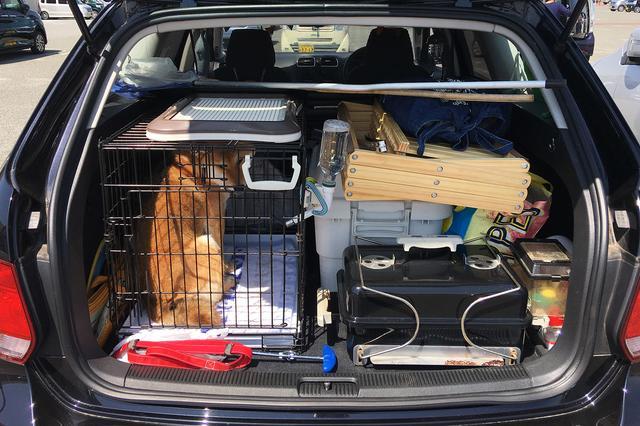 画像4: ワンコと一緒にキャンプへ