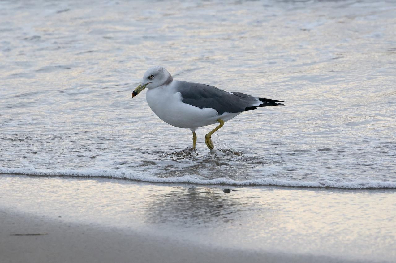 """画像4: Q3と""""クルマで走れる砂浜""""へ"""