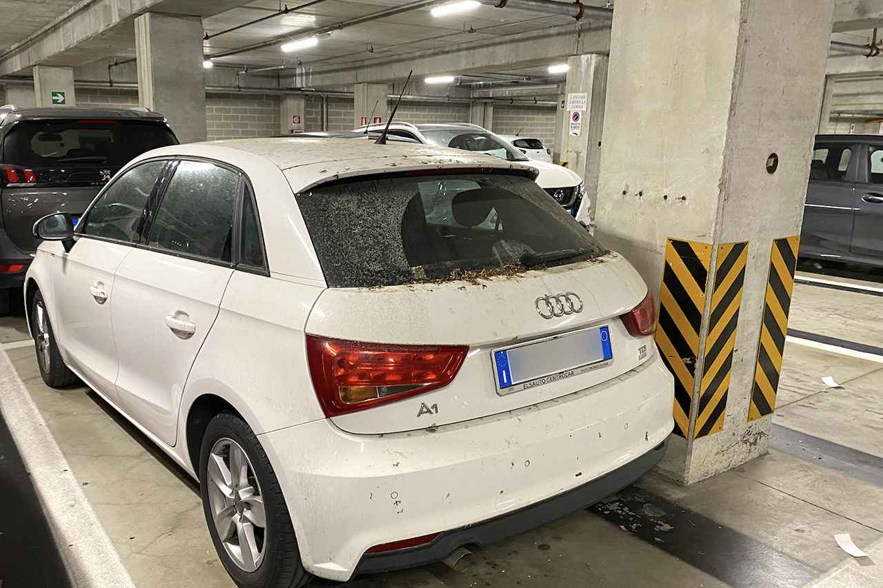 画像: 初代Audi A1 Sportbackは枯れ葉の劣化具合から、放置車両の匂いが漂っている。