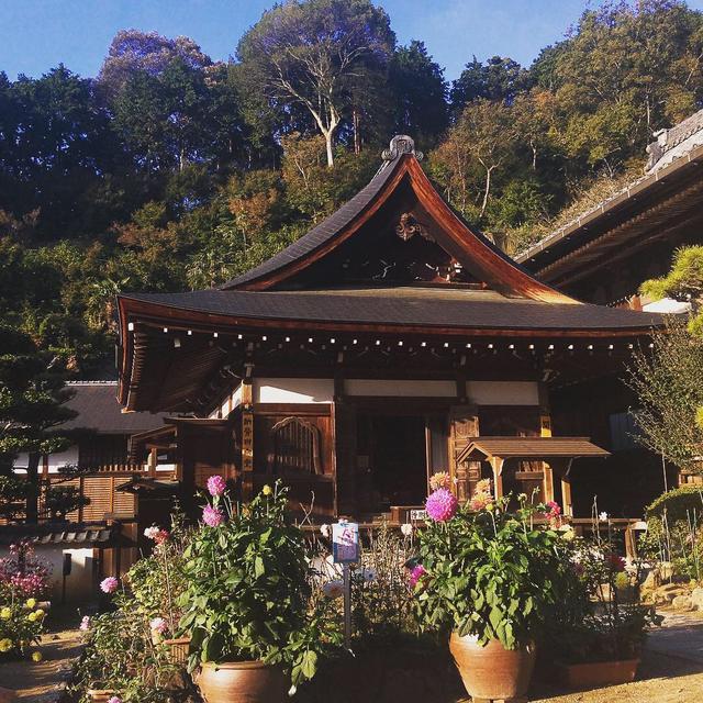 画像: 「花の寺」と言われている岡寺。境内のいたるところにお花が飾られていました。