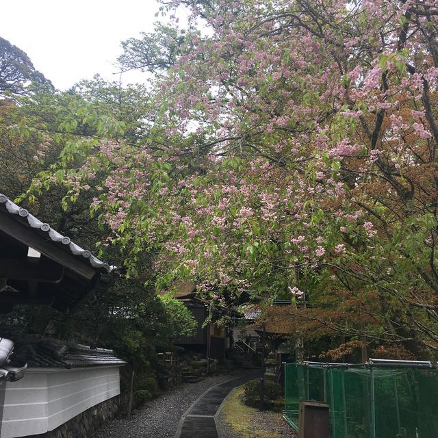 画像: 約20分間、境内を自由に散策。雨上がりの山寺は新緑が美しく空気が澄んでいました