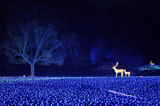 画像: 奈良春日野国際フォーラム 甍~I・RA・KA~の庭園イルミネーション(2019年の様子)