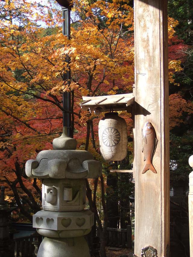 画像: 本堂の柱に打ち付けられた、精進落しの鯉。こちらに触れて、西国巡礼の旅を締めくくります。