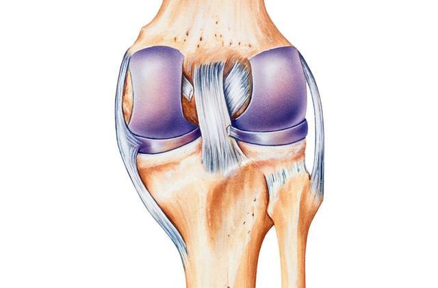 画像: 膝靭帯・・・前後左右や回転方向への安定・制御をつかさどる複数の強力な靭帯の集合。