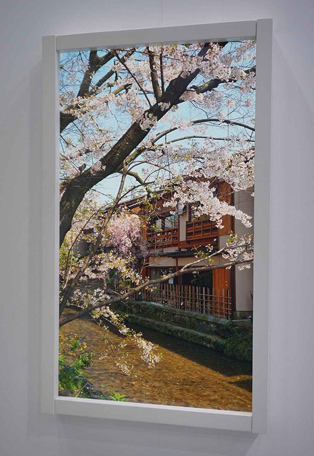 画像: 会場では印刷方式有機ELパネルを使ったデジタル窓に、京都の風景が映し出されていた。桜の花びらや下を流れる小川のせせらぎなど、実にリアルだった