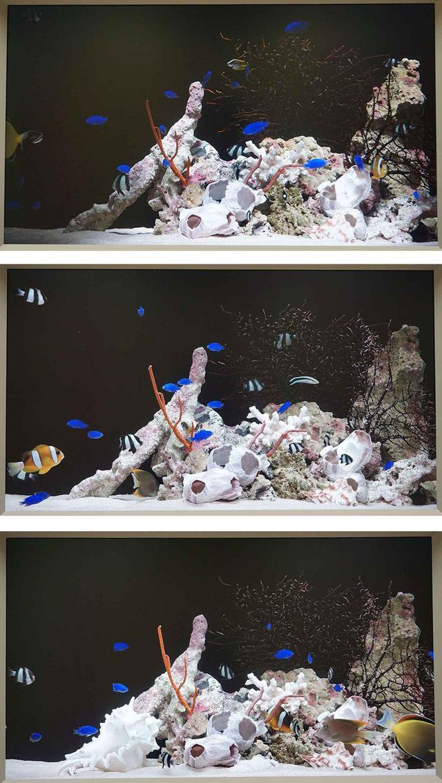 画像: 3枚の動絵画。上から陰影を強調したもの、中央はスタンダードな映像、最下段が情報量をもっとも引き出した映像となる