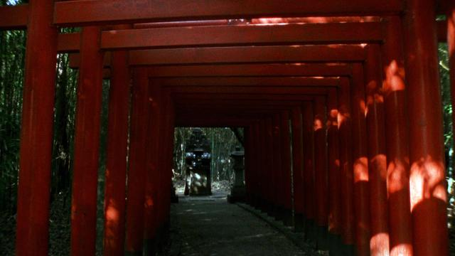 画像2: ルシール・カラ監督作『日本人への旅』【クライテリオンNEWリリース】