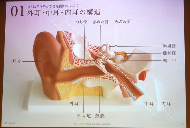 画像: 人間の耳の構造の模式図