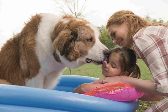 画像2: 【コレミヨ映画館vol.30】『僕のワンダフル・ジャーニー』 犬とヒトの触れ合い、思い出を描いた人気作の続篇