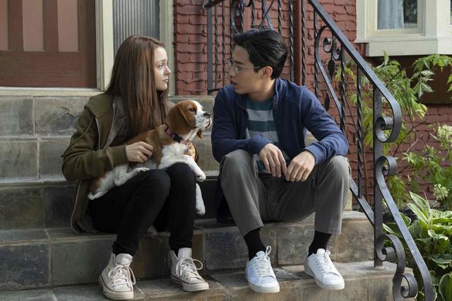 画像1: 【コレミヨ映画館vol.30】『僕のワンダフル・ジャーニー』 犬とヒトの触れ合い、思い出を描いた人気作の続篇