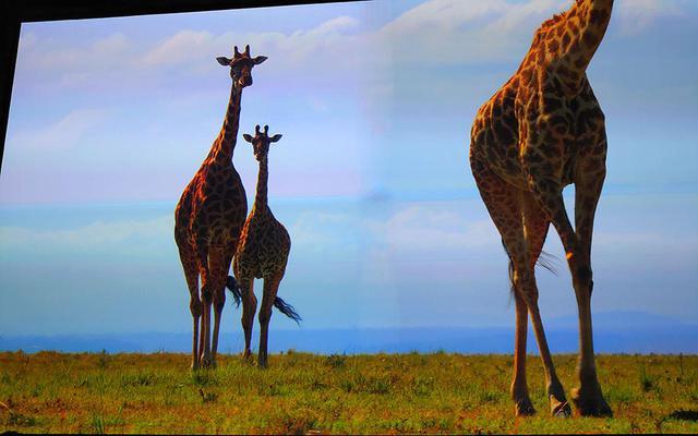 画像1: 【麻倉怜士のMIPCOM2019報告:07】8K自然科学ドキュメンタリー『MATING GAME』。最高の専門家と作る自然科学の国際共同制作