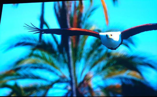 画像: 水を求めて鳥がやってきた