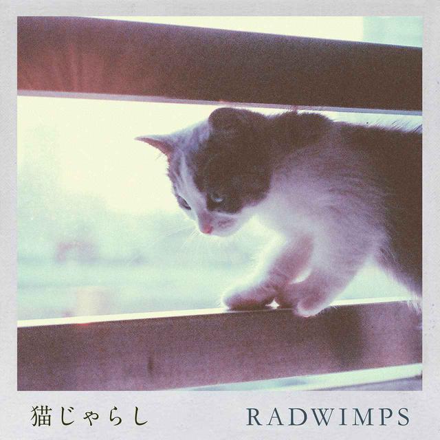 画像: 猫じゃらし / RADWIMPS