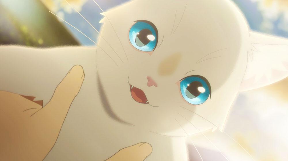 画像2: ちょっと不思議な少女は、猫となって大好きな人に会いに行く