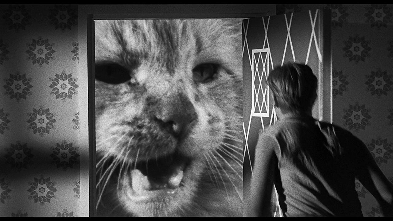 画像3: ジャック・アーノルド 主演作品『縮みゆく人間』【クライテリオンNEWリリース】