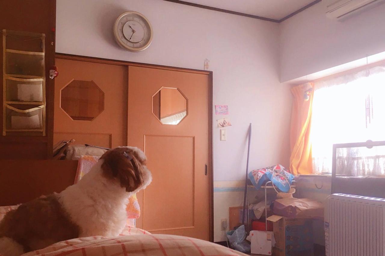 画像: 家族の誰よりも日当たりのいい位置にある、わたしの部屋。10年前から時間が止まっている