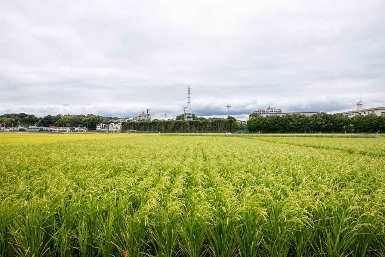 画像: 訪れたのは9月の半ば。稲穂が実り始め、風に揺れている時期でした!