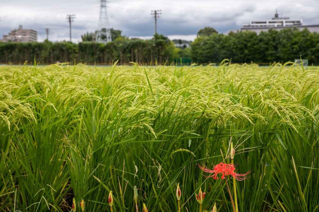 画像: 試飲の後は、周囲ののどかな風景を眺めながら散策も