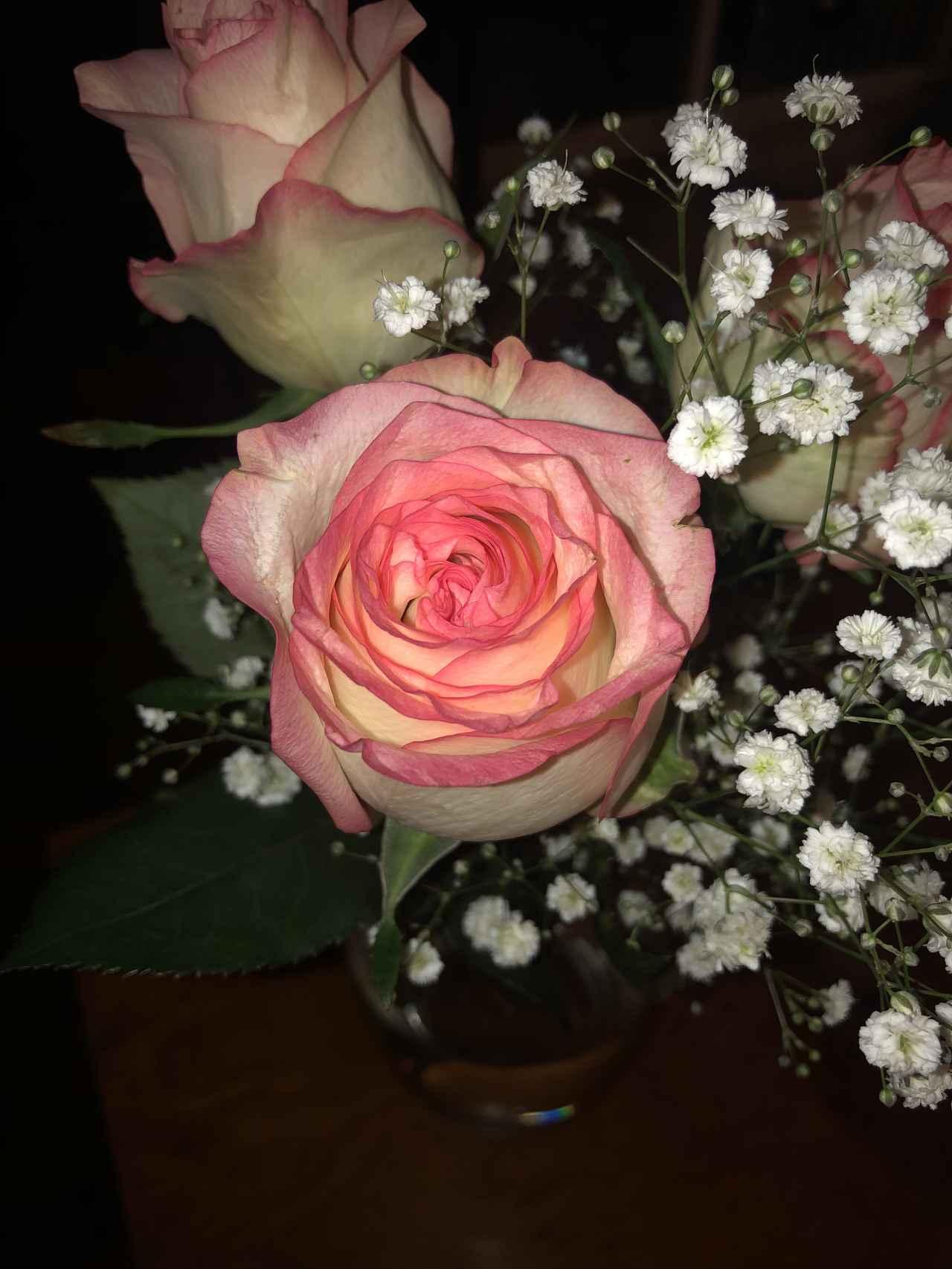 画像: お花にフラッシュが当たって、花が浮き上がって見えます。