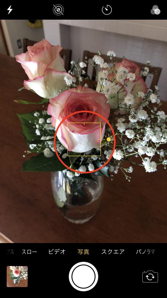 画像: 花びらの白い部分をタッチすると、全体的に画面が暗くなりました。