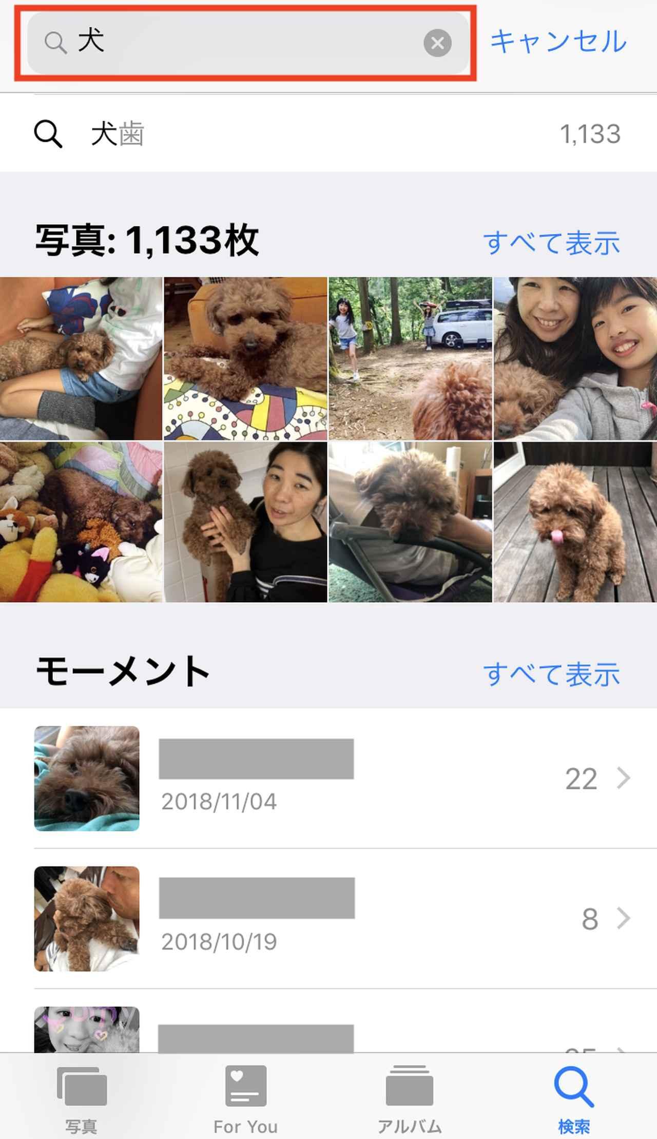 画像: 「犬」と入力すると、写真の中から犬が写った写真だけが表示されます。