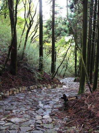画像: 箱根 旧街道石畳
