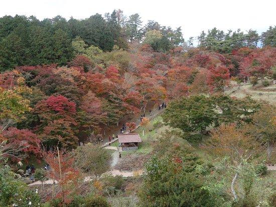 画像: 修善寺自然公園