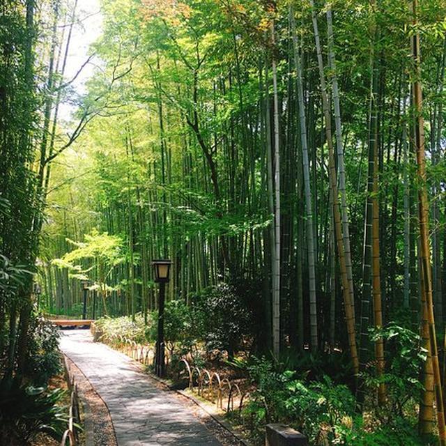 画像: 竹林の小径