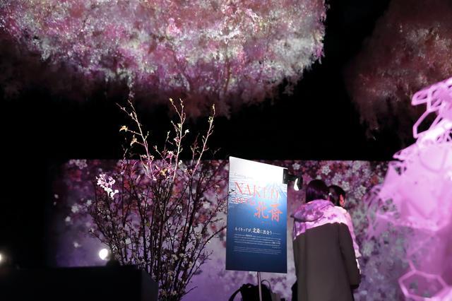 画像2: 大桜彩
