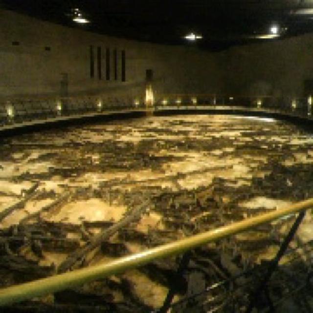 画像: 地底の森ミュージアム