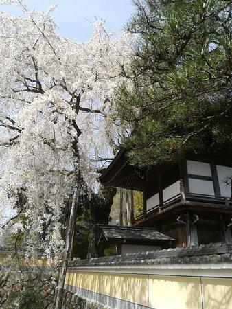 画像: 浄福寺