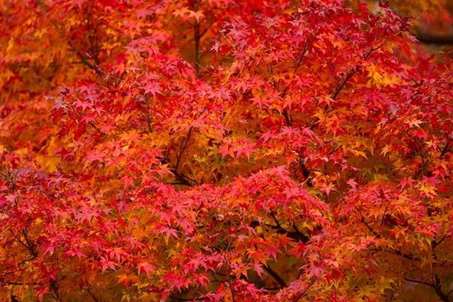 画像: 瑞宝寺公園