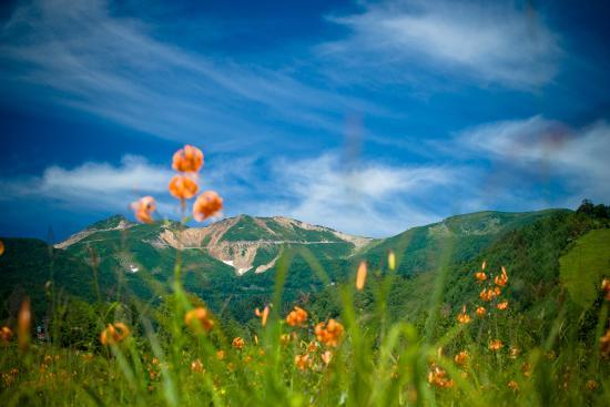 画像: 乗鞍高原