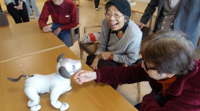 画像: 有料老人ホームに新型「aibo」導入/ソニー・ライフケア