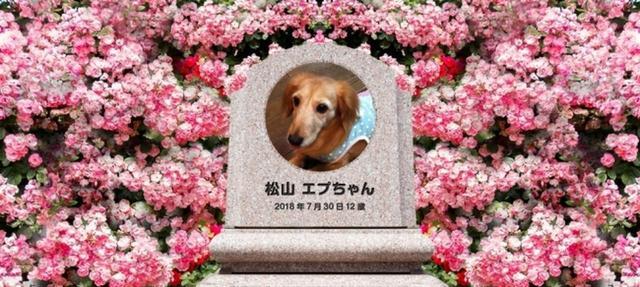 画像: 「ペットロス症候群」を予防。家族同然のペットのお墓参りができるWebサービスを開始/あんどペット