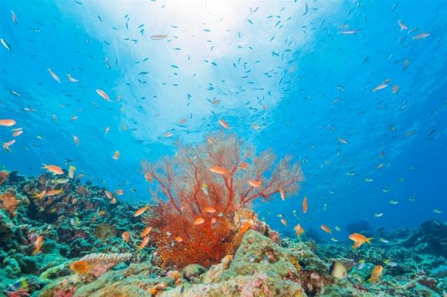 画像: 海の音色の散骨ポイント