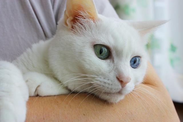 画像: 「ペットの終活セミナー」事業開始 ペットと幸せに暮らし、ペットロスを軽減させる/ペトハピ株式会社
