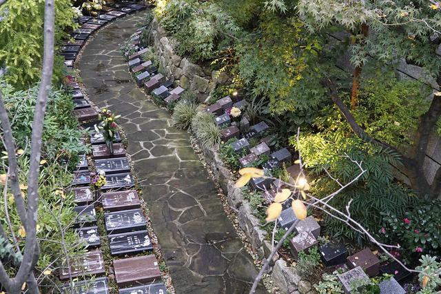 画像: 広まるアンカレッジの樹木葬