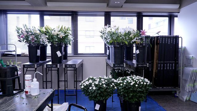 画像: 2階窓際には、ユリや菊の蕾を開かせるスペースが。