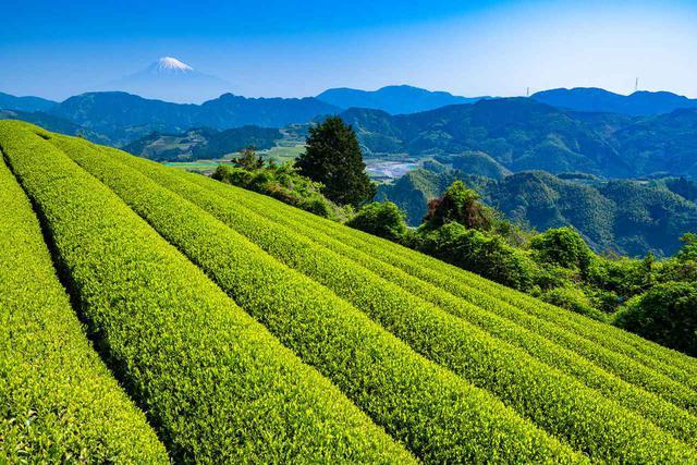 画像: 静岡・ハラダ製茶が葬儀場のコンサルティング事業を強化