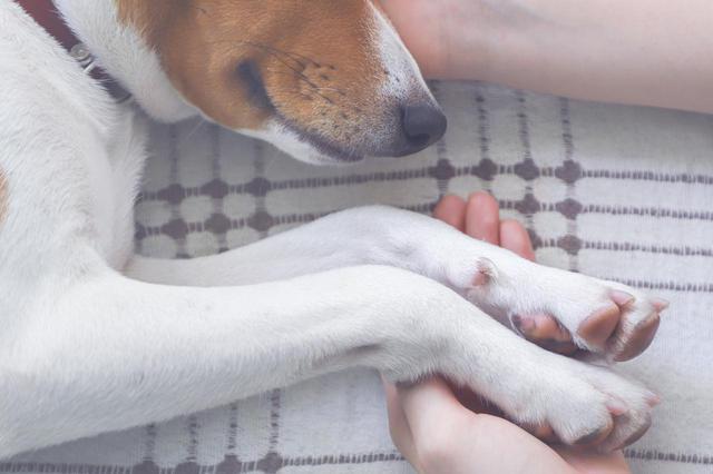 画像: ビデオ中継でペットの葬儀を立会代行/大森ペット霊堂