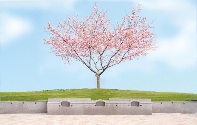 画像: 桜の木の下で眠る樹木葬