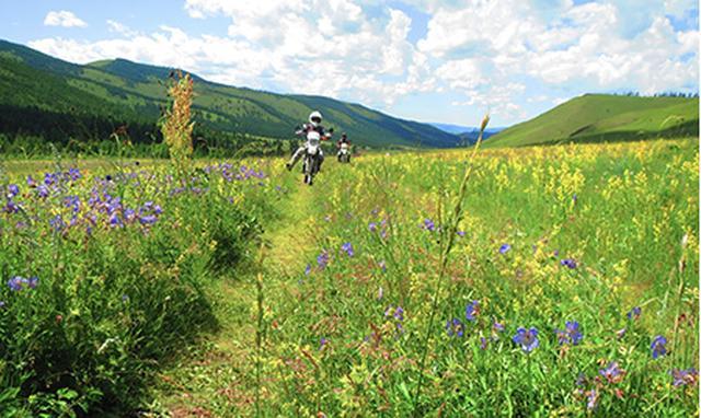 画像2: 夏のモンゴルは花の楽園