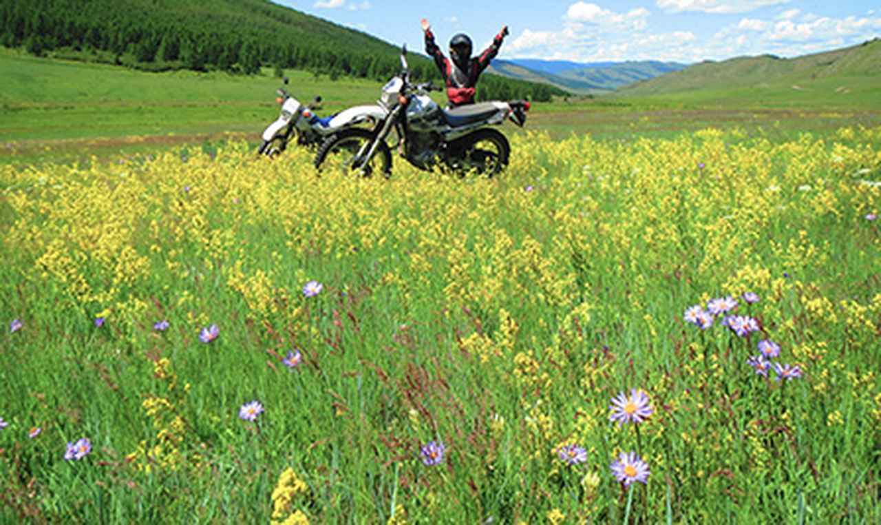 画像1: 夏のモンゴルは花の楽園
