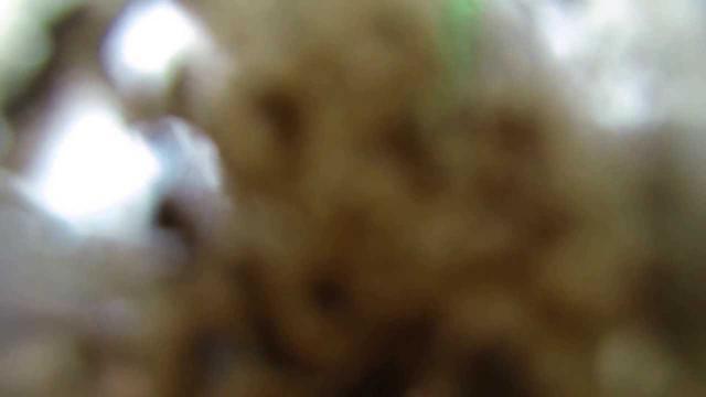 画像: Erzbergrodeo Taichi Tanaka footage by Enduro.J youtu.be