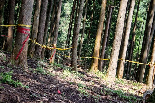 画像5: モトクロスコースから林間コースまで幅広く楽しめる
