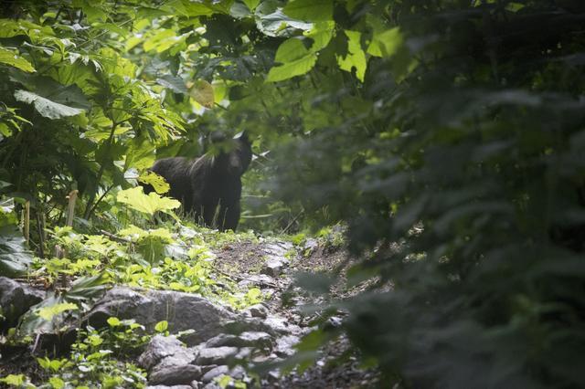 画像: 2015年はoff1.jpスタッフの稲垣も取材に同行。コース中で巨大なヒグマに遭遇したり…