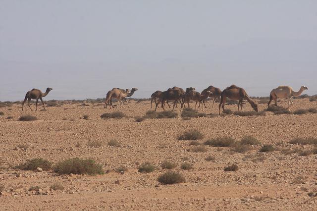 画像: 1月10日(金) ステージ4 モロッコ アッサ~スマラ 404.52km