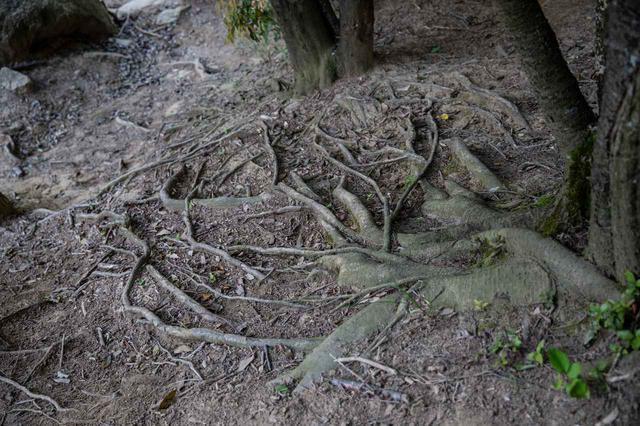 画像1: チャレンジ② キャンバー×木の根